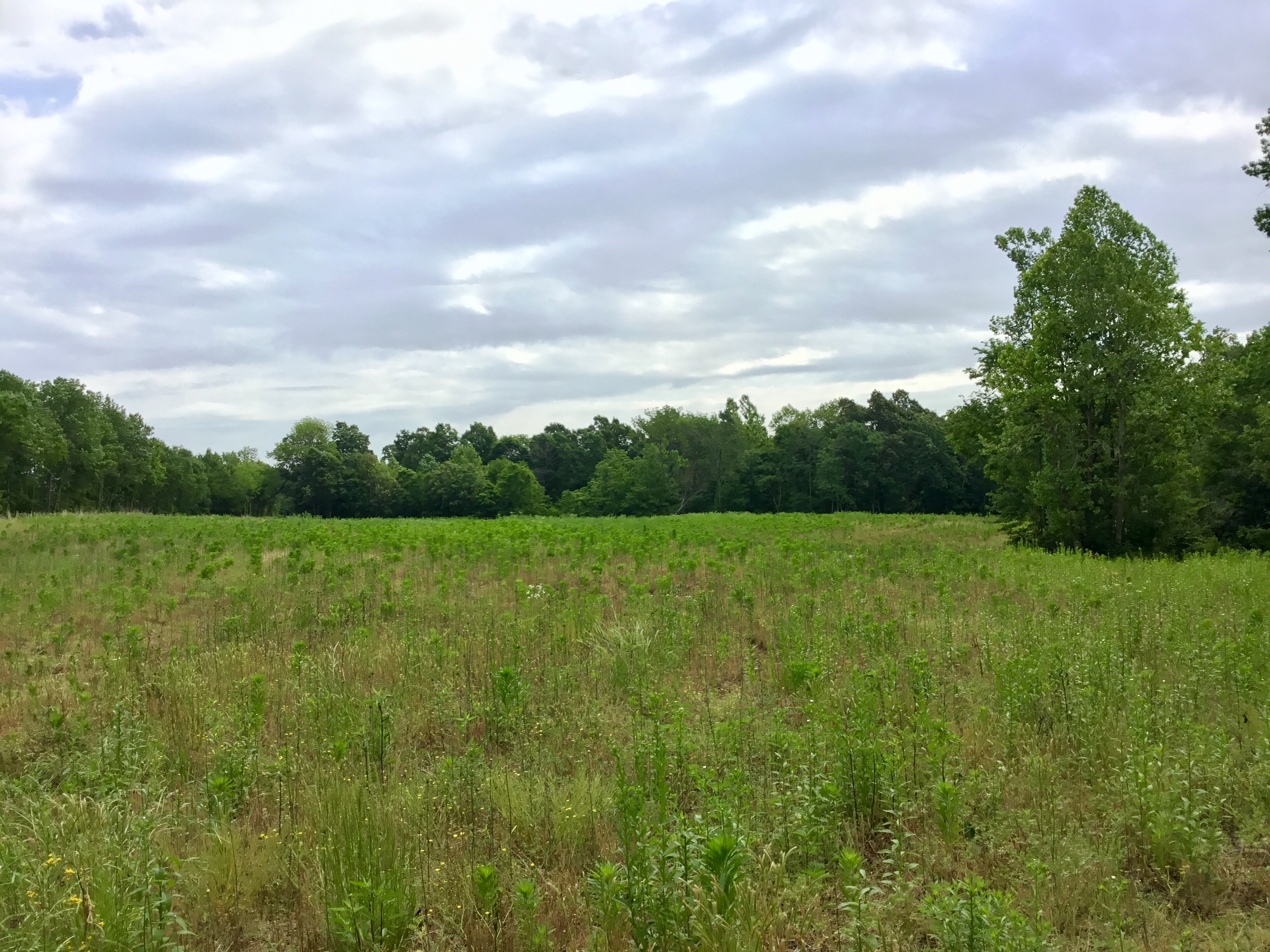 Featured Waterfront - 100 Acres in Marshall County,Ky